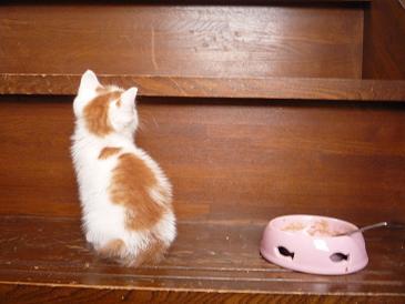 ちび猫25−2.jpg